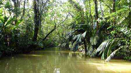 Tour im Tortuguero Nationalpark
