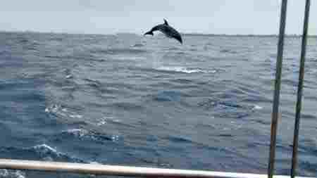 delfin auf san blas