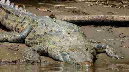 Fauna im Tortuguero Nationalpark