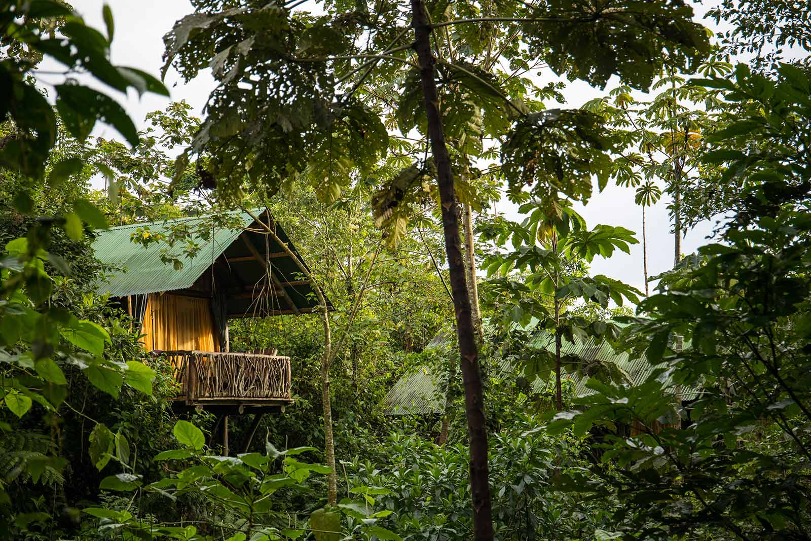 bungalow tigra rainforest lodge